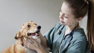 estudante de medicina veterinária
